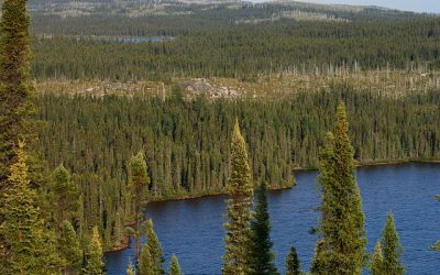 Facts about Boreal Forest Birds