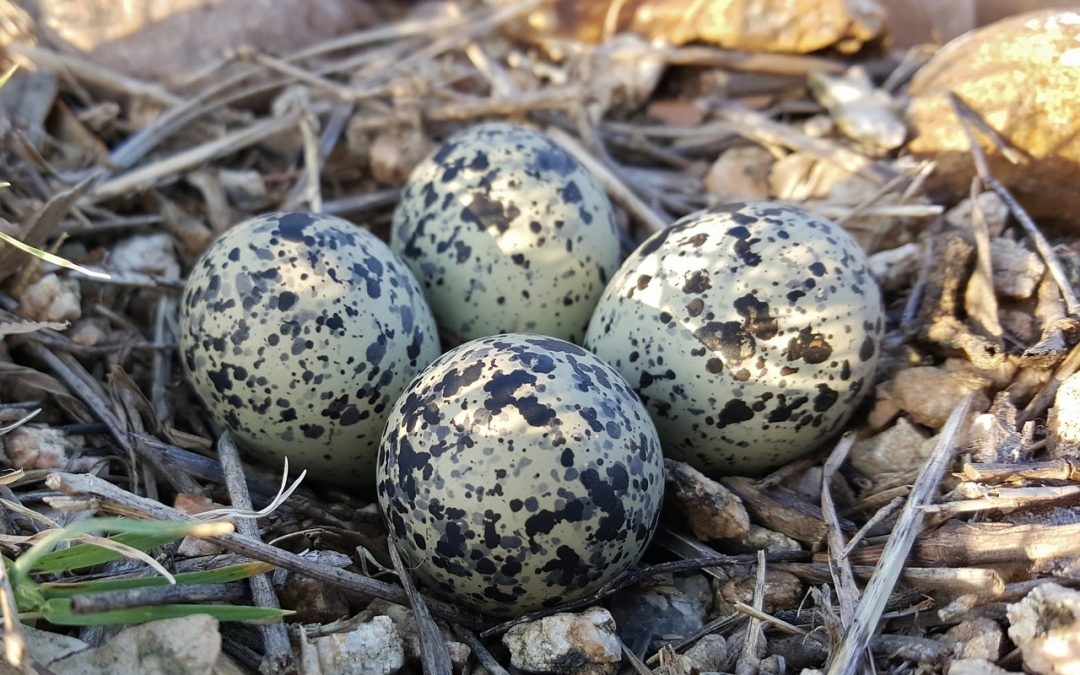 Quick Facts About Bird Eggs