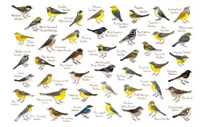 How Bird Classification Works