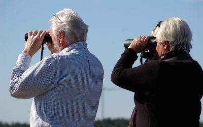 Tips for Novice Birders – Part 2