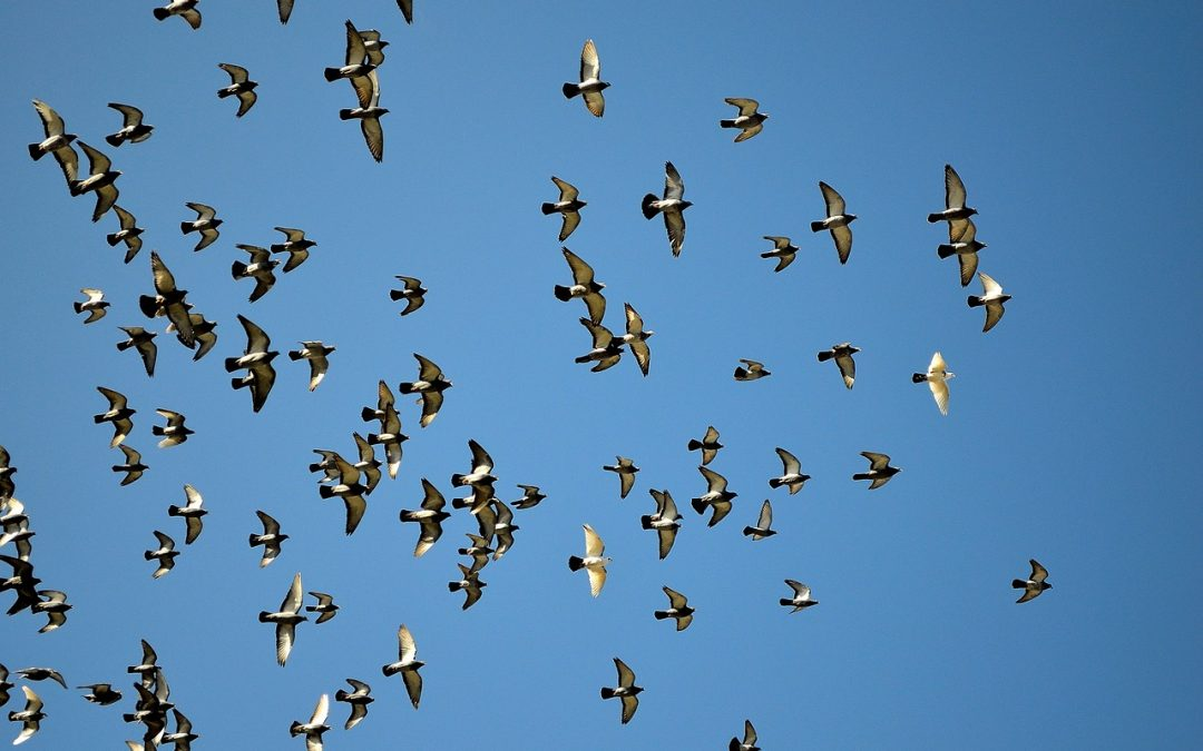 How many birds are there on Earth?