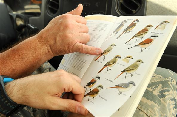 Ten Tips to Help Avoid Mis-Identifying Birds