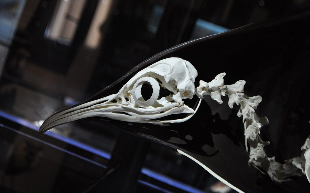 Quick Facts About Bird Anatomy