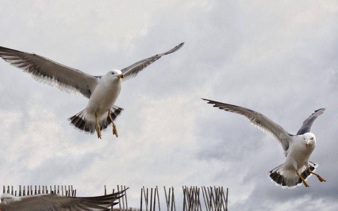 Quick Facts About Bird Flight