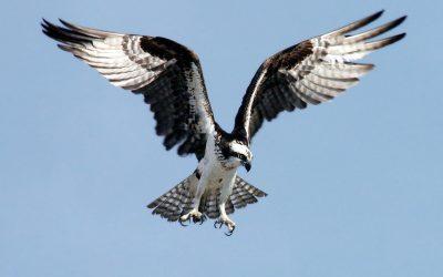 What Makes Birds Such Unique Animals?