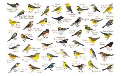 How Bird Classification Works