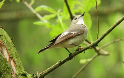 Identification Difficulty for the Bird Families of North America
