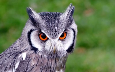 What is an Owl Pellet?